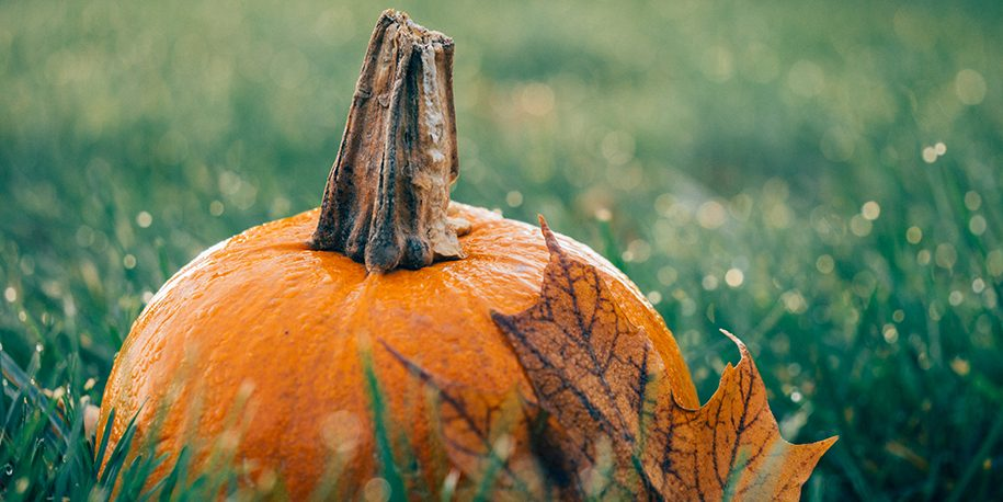 Halloween pumpkin and fall leaf